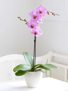 CLV loves the look of orchids. They would make a beautiful table piece.