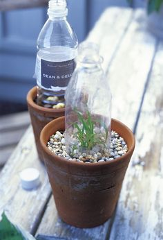 seedling hot house #diy #garden