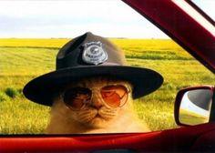 anim, cops, meow, funny cats, funni
