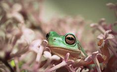 froggy flower