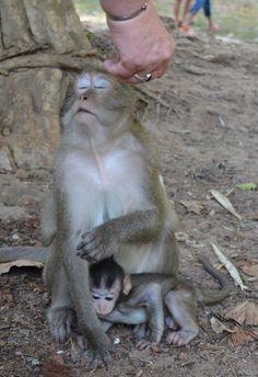 Temple monkeys at Angkor Wat