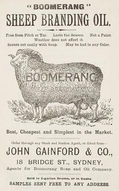 sheepbreed sydney, sydney carniv