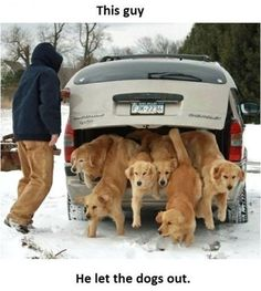 anim, trunk, dogs, dream come true, golden retrievers