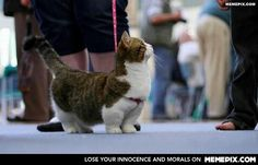 There's a breed of cats called Munchkins. They have tiny legs!