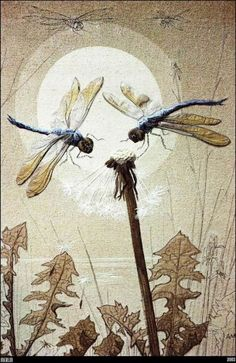 Dragonfly and moon love this