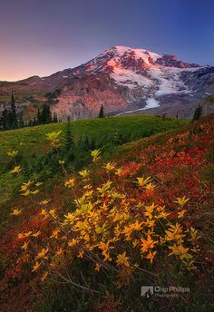 Fall Sunrise, Paradise, Mount Rainier