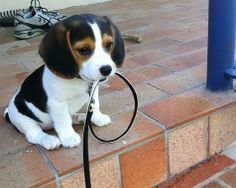 Do you have any choice but to take me for a walk?  I mean really... Just look at me!!!