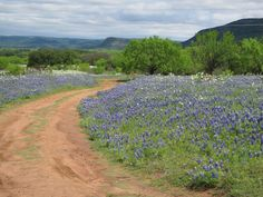 texas hill country - Google Search