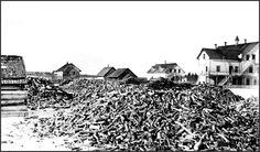 Wood supply for Indian Residential School, Vermilion, Alta.