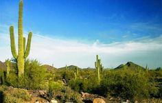 Saddle-up for an Arizonian adventure