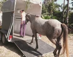 Help Your Horse with Relocation