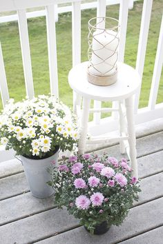 Patio Flowers for Autumn - Mums