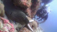 Scuba Cat Diving: up close