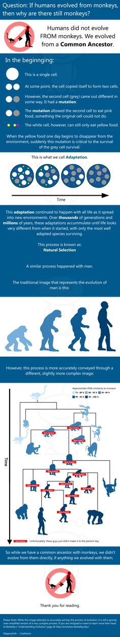 Evolution Infographic