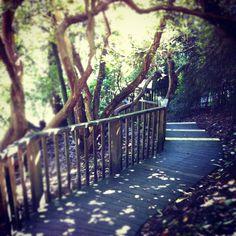 Lost Garden of Heligan #cornwall #garden #trees #forest