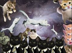 I'm only designing with cats in space from now on.
