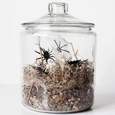 Don't get creeped out! Make a Spooky Halloween Terrarium for an easy decoration: http://www.bhg.com/halloween/indoor-decorating/quick-clever-halloween-centerpieces/?socsrc=bhgpin091614spookyhalloweenterrarium&page=4