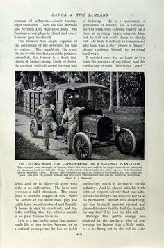 C1920 Coconut Plantation Samoa