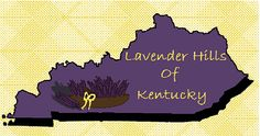 Lavender Hills of Kentucky