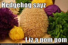 Hedgehog pompom