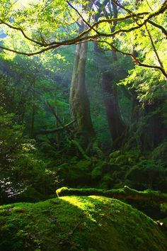. forests, magic, nature, wood, dream, trees, light, sun rays, moss garden