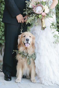 #golden #pet #dog