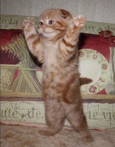 """""""Now, throw your hands in the air.  And wave 'me like you just don't care."""" --Outkast"""