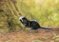 Little skunk