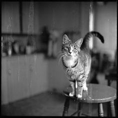 cat by Walker Evans 1940