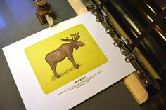 Moose Letterpress Print by QuailLanePress on Etsy, $35.00