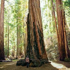 Montgomery Woods State Natural Reserve in Ukiah, CA