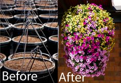 thank you Swan River Gardens for making our planting lives so easy! Color Ring Hanging Basket Before and After