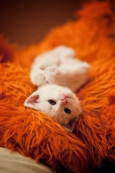 Orange AND kittens? Sign me up!