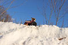 Willa sitting on top of the world in her Eddie's Wheels wheelchair.