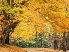 Fall Pictures - Bing Images
