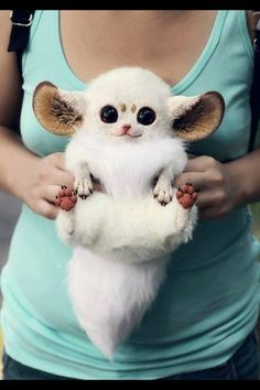 this is not real. but still cute!