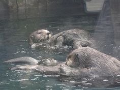 otters! http://ranchococoa.blogspot.com/2012/07/zoo-day-pittsburgh-zoo.html