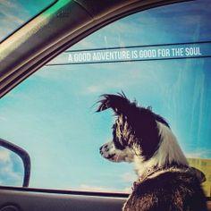 good:  A good adventure is good for the soul. -@Eyoalha http://ift.tt/1hn6LYE