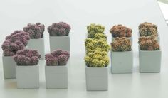 Spell out your initials with these colorful living cacti!