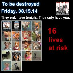 REMOVE RISA WEINSTOCK HEAD OF NYC ACC/ ADOPTABLE PETS SLAUGHTERED 7 DAYS A WEEK.  http://www.thepetitionsite.com/takeaction/624/823/539/
