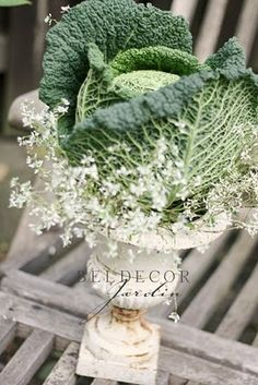 cabbage leaf in an antique urn