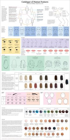 Catalogue of Human Features: body type, face shape, eyes, noses, hair, .