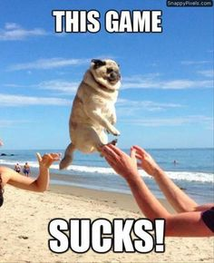 Pass the Pug