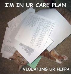 Haha cats and nursing!!