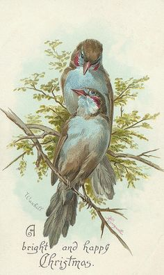 sweet birdies