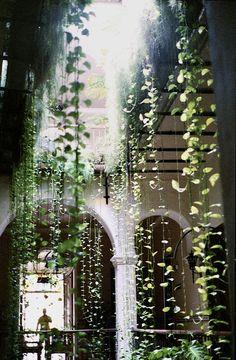 lights, interior, hanging plants, vines, green, low light, hous, courtyard, hanging gardens