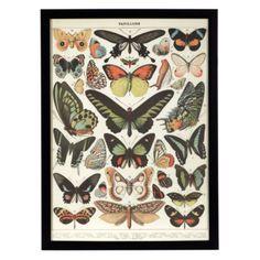 Butterflies from Z Gallerie