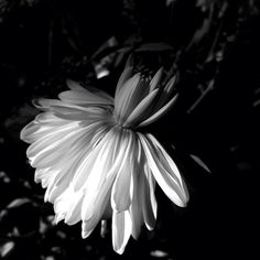 Flower Tutu by Amo Iphoneography aka melle Amo, via Flickr | #bw #blackandwhite #black #white #iphoneography
