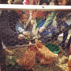 Chickens in the Garden! 3/29/2013 1:30-4:00