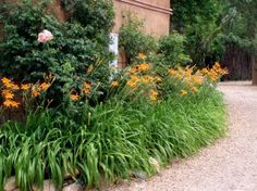 Great idea for my daylilies-use my monkey grass in front.